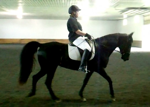 Gaited horse at Three Ring Circus dressage show