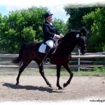 Naturally Gaited Dressage
