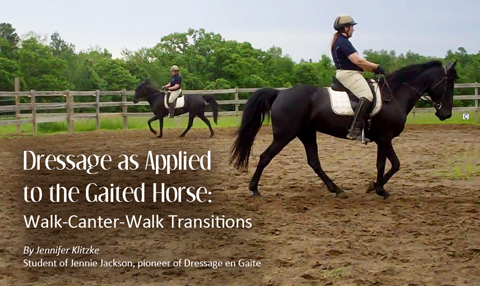 dressage-as-applied-to-the-gaited-horse-walk-canter-walk-transitions-by-jennifer-klitzke
