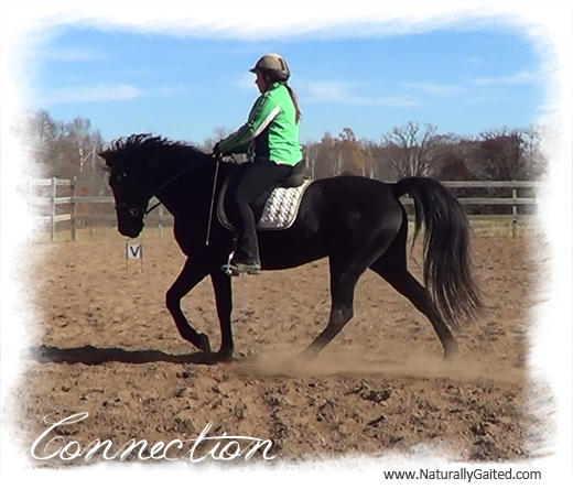 naturally-gaited-dressage-is-more-than-trot-connection-jennifer-klitzke
