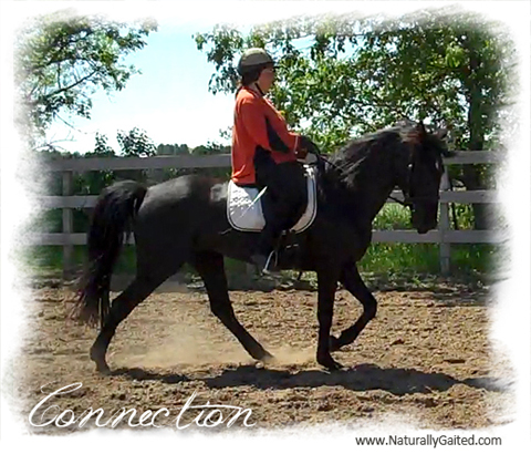 naturally-gaited-dressage-is-more-than-trot-jennifer-klitzke-connection