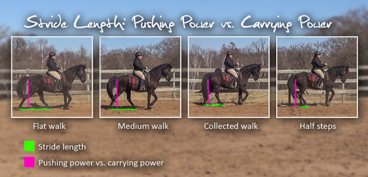 stride length: pushing power vs carrying power