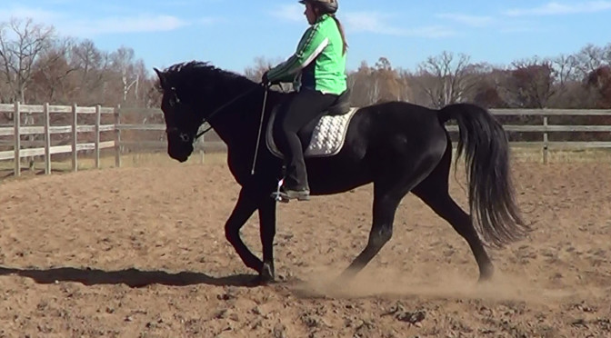 Riding position and its effect on the gaited horse