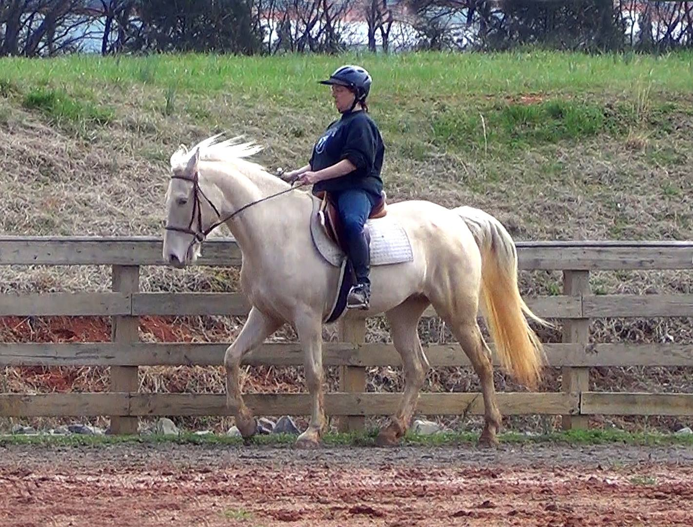 Naturally gaited Champaign horse