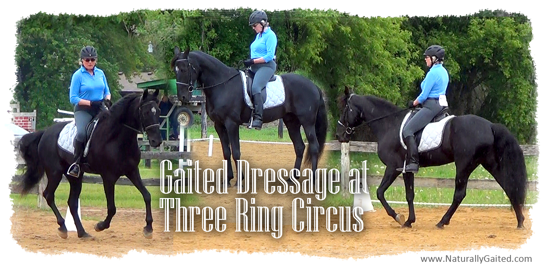 2015 Gaited Dressage at Three Ring Circus