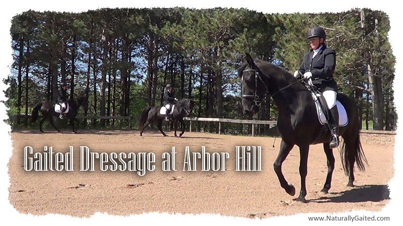Gaited Dressage at Arbor Hill
