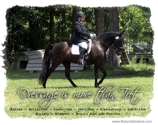 dressage is more than trot