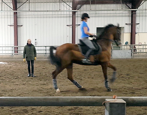 Paul Belasik dressage clinic