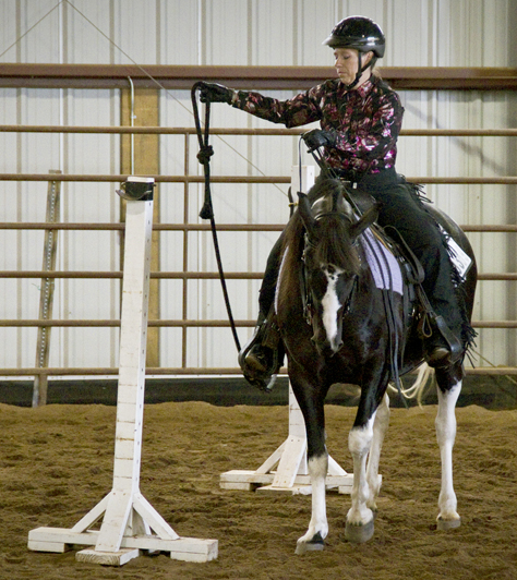 Gaited horse and trail obstacles