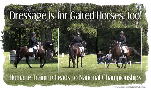dressage s for gaited horses too