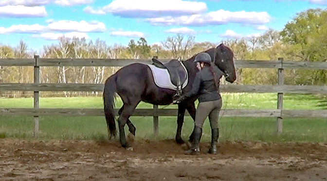 Upper Level Movements and the Naturally Gaited Horse