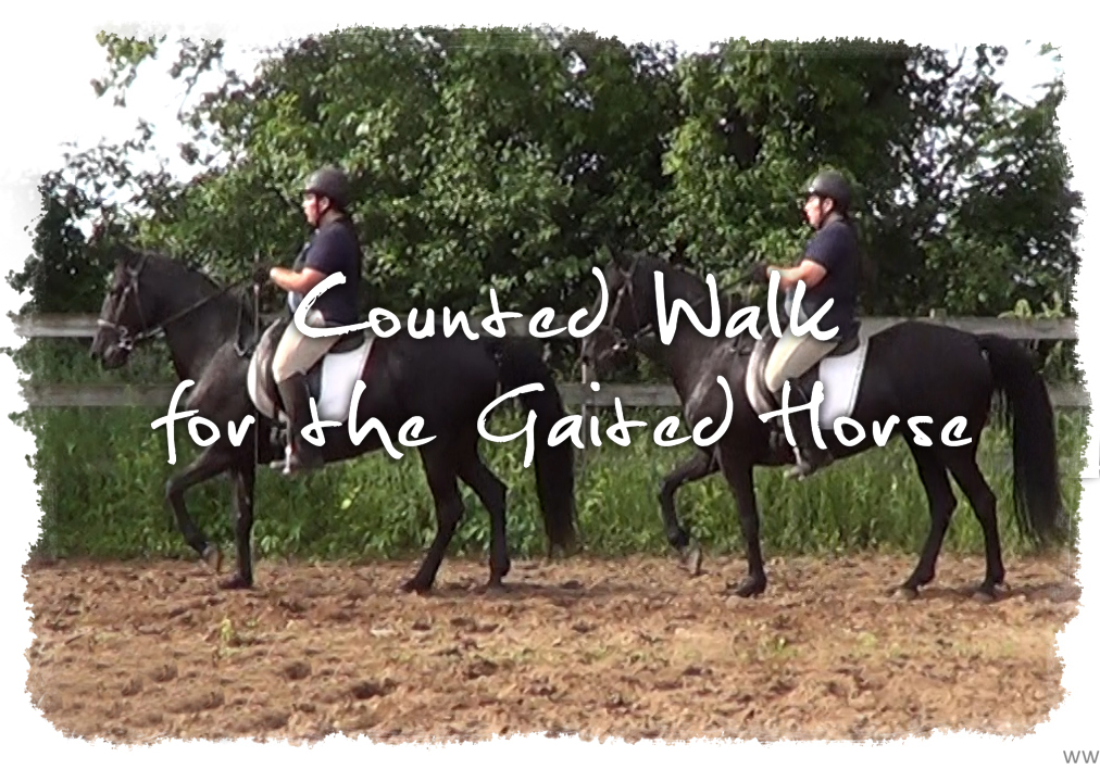 Counted Walk for the Gaited Horse