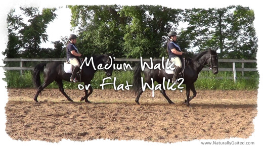 Tennessee walking horse Medium Walk or Flat Walk