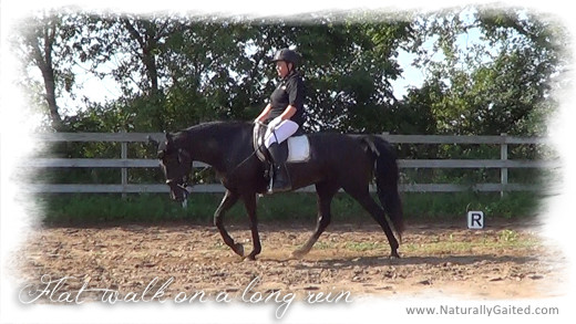 flatwalk on a long rein