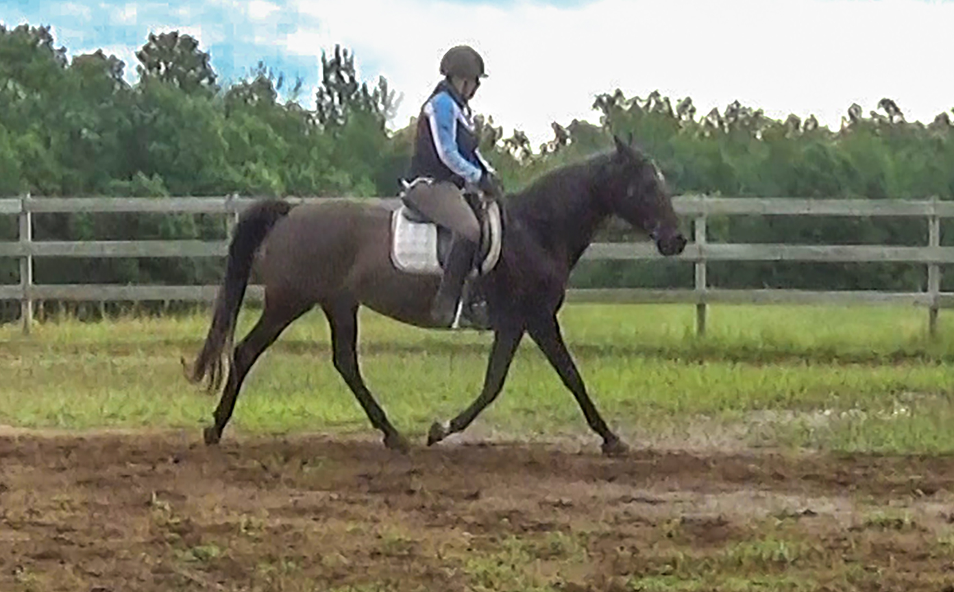 Benefits of trotting the gaited horse on cue
