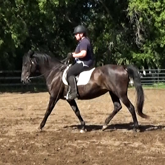 Easy gait after quality trot on cue