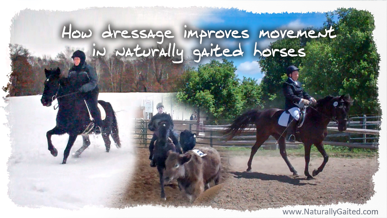 how-dressage-improves-movement-in-naturally-gaited-horses
