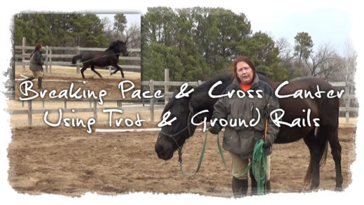 Breaking Pace & Cross Canter Using Trot & Ground Rails