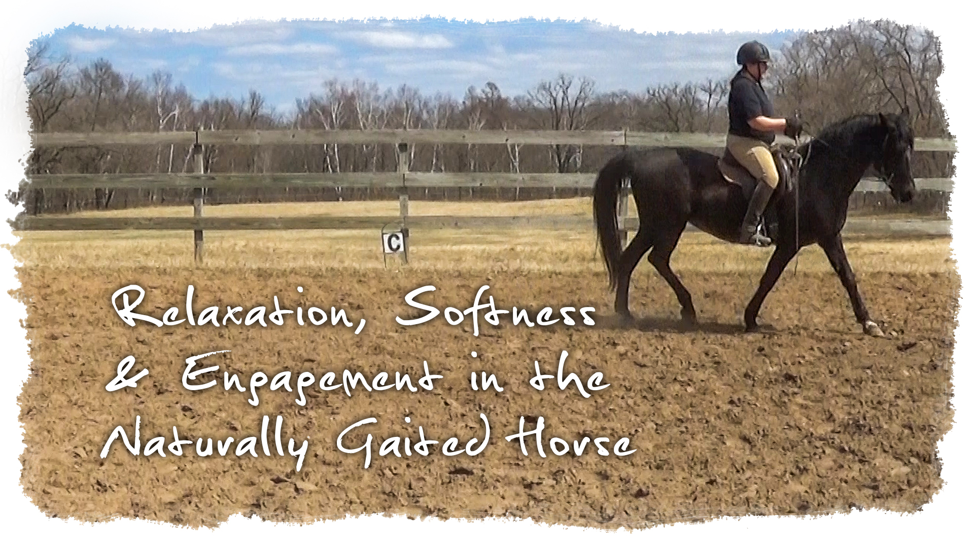 relaxation softness and engagement in the naturally gaited horse