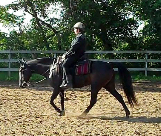 Gaited western dressage: Flat walk in a long and low position.