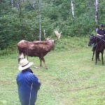 encountering the moose obstacle