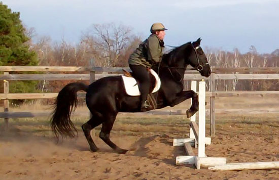 Gaited horses over fences
