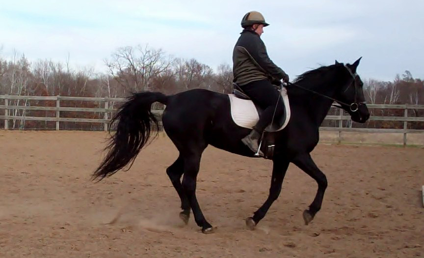 Starting the gaited horse in canter