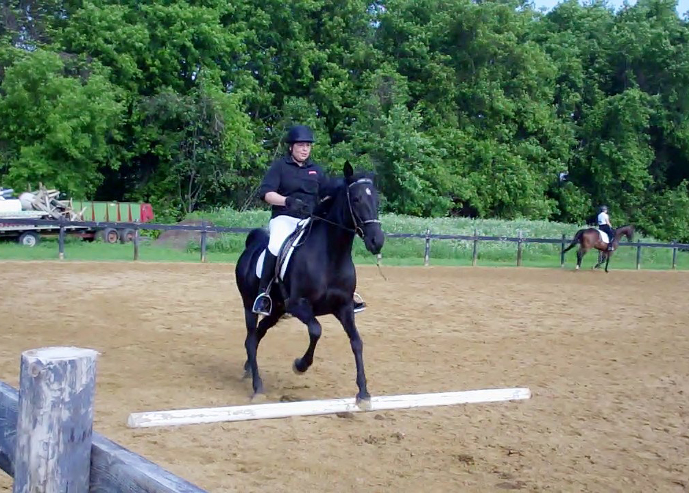 Gaited horse jumping