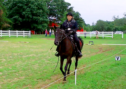 cantering a gaited horse
