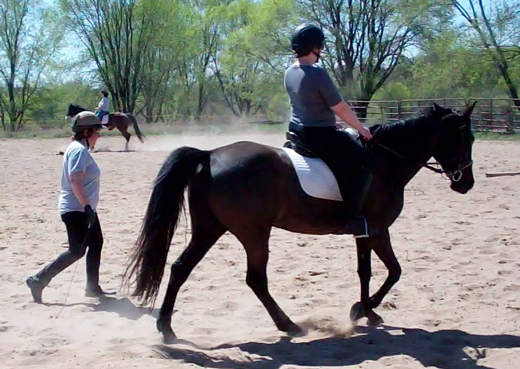 First ride on a gaited horse