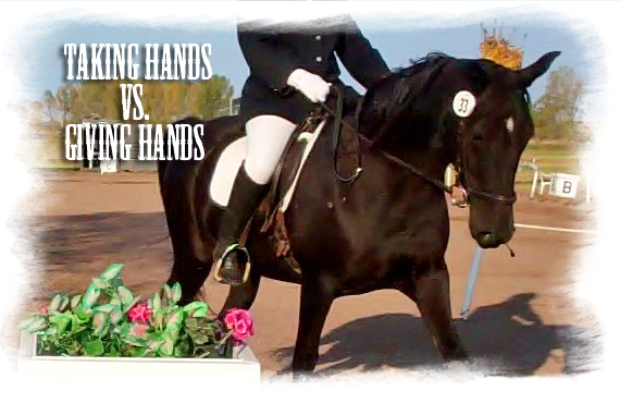 gaited-dressage-giving-hands