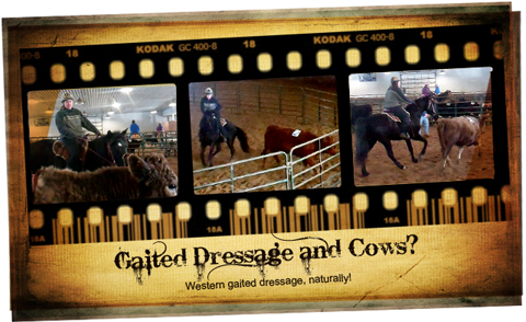 Western Gaited Dressage