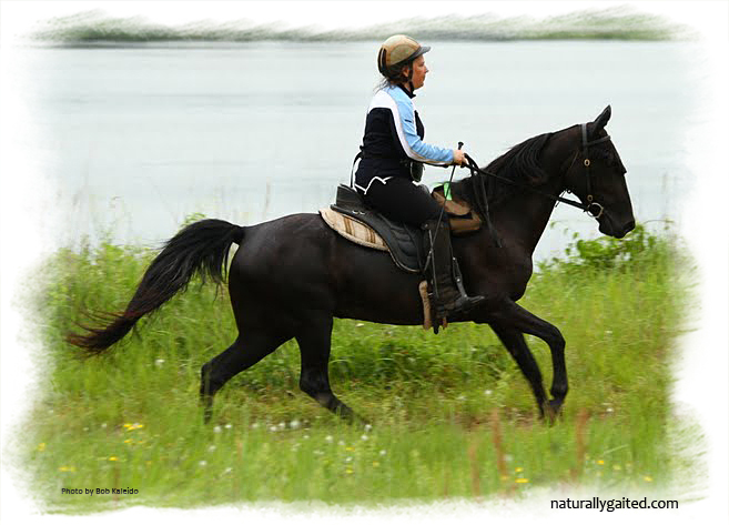 Endurance riding with gaited horses