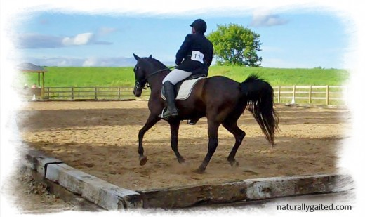naturallygaited-dressage-at-st-geroge-canter-2