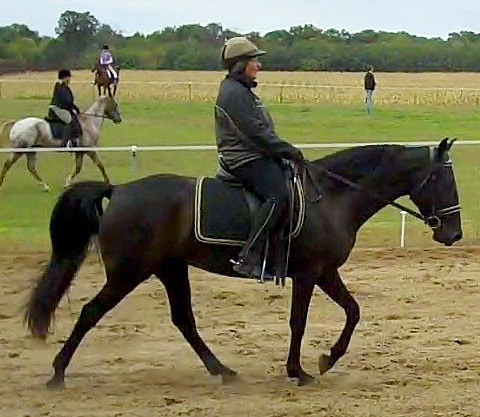 Gaited Dressage: Training Level