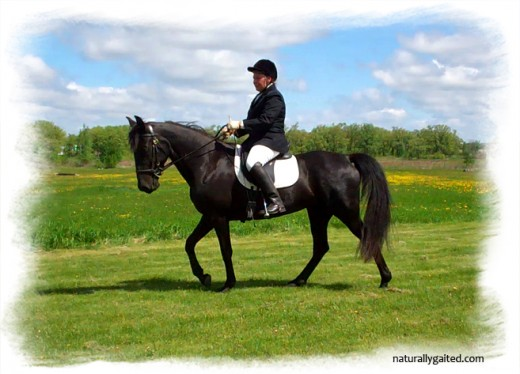 naturallygaited-rocking-r-farm-gaited-dressage