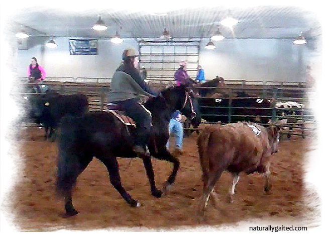 naturallygaited-working-with-cows