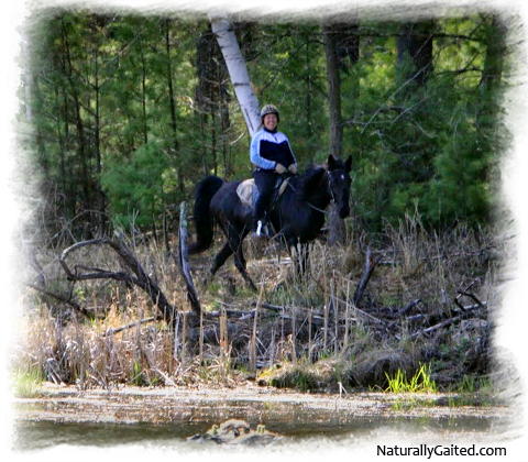 naturally-gaited-sisu-on-the-border-jennifer-klitzke
