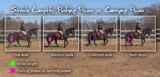 stride length: pushing power vs carrying power