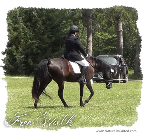 freewalk on a long rein