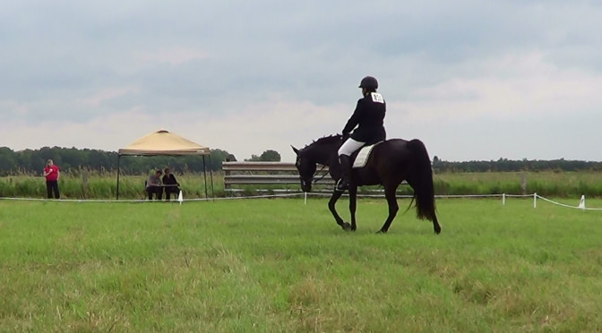 Video: Gaited Dressage: Second Thoughts about Long and Low