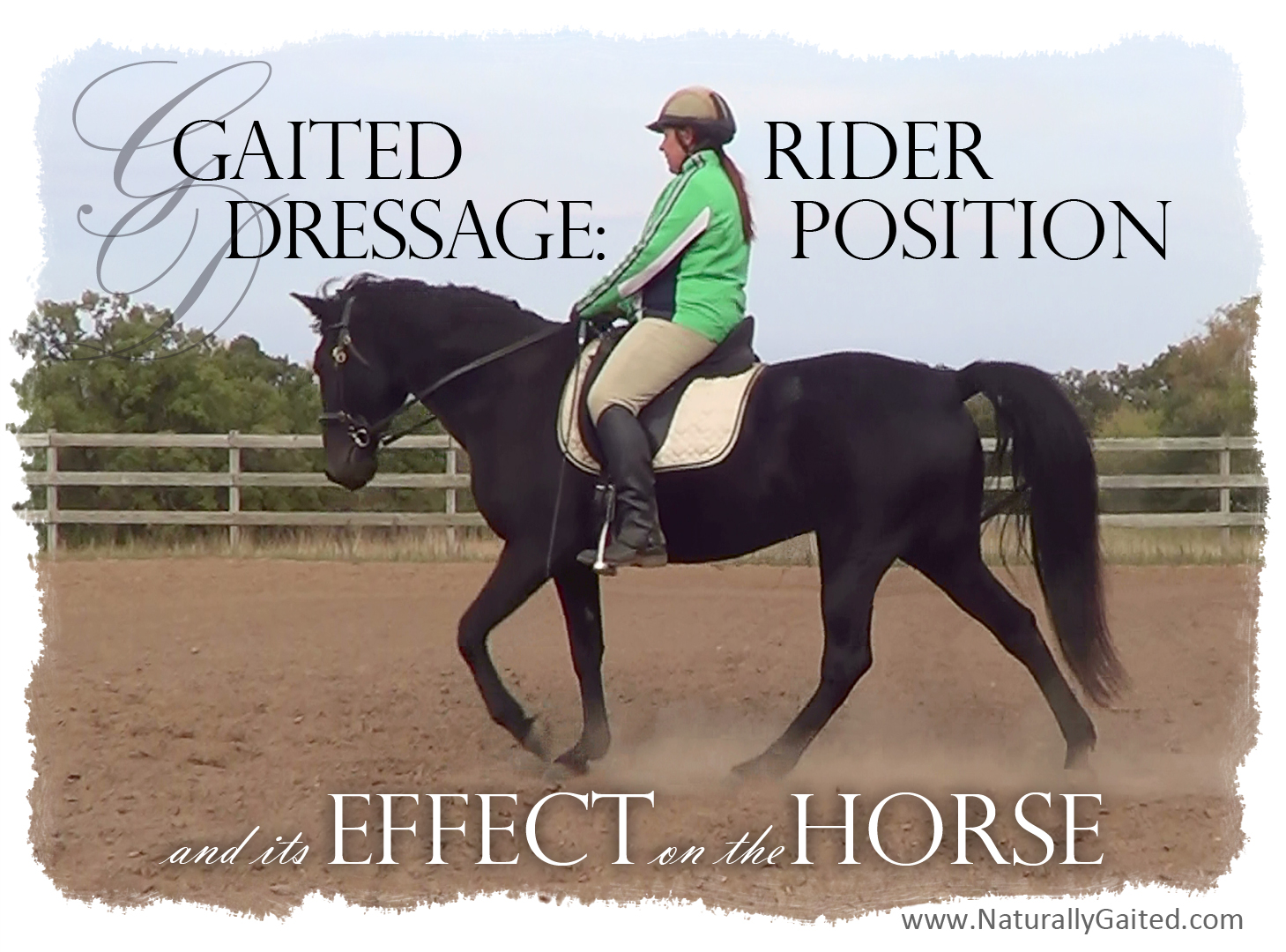 Gaited Dressage: Riding position and its effect on the horse