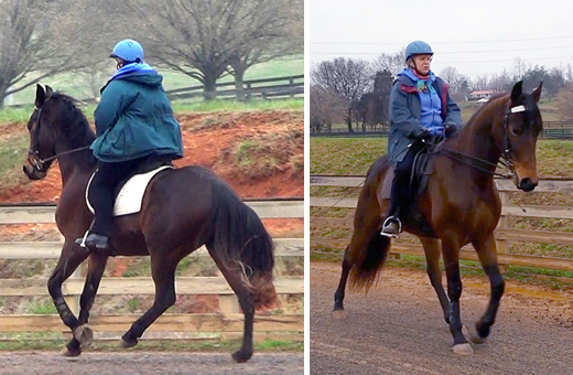 Jennie Jackson demonstrates canter and romvere on a gaited horse