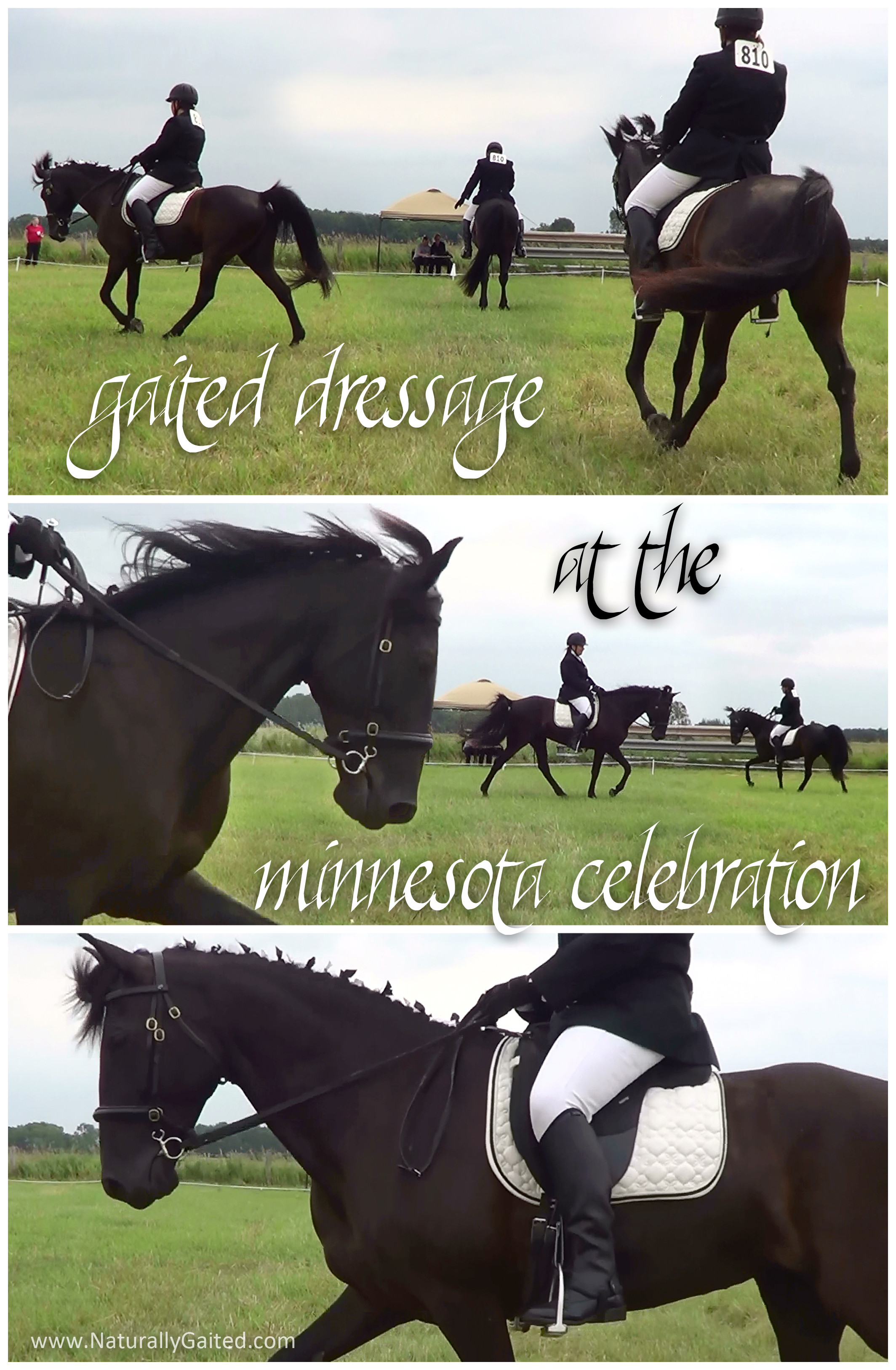 2014 MN Celebration offers Gaited Dressage