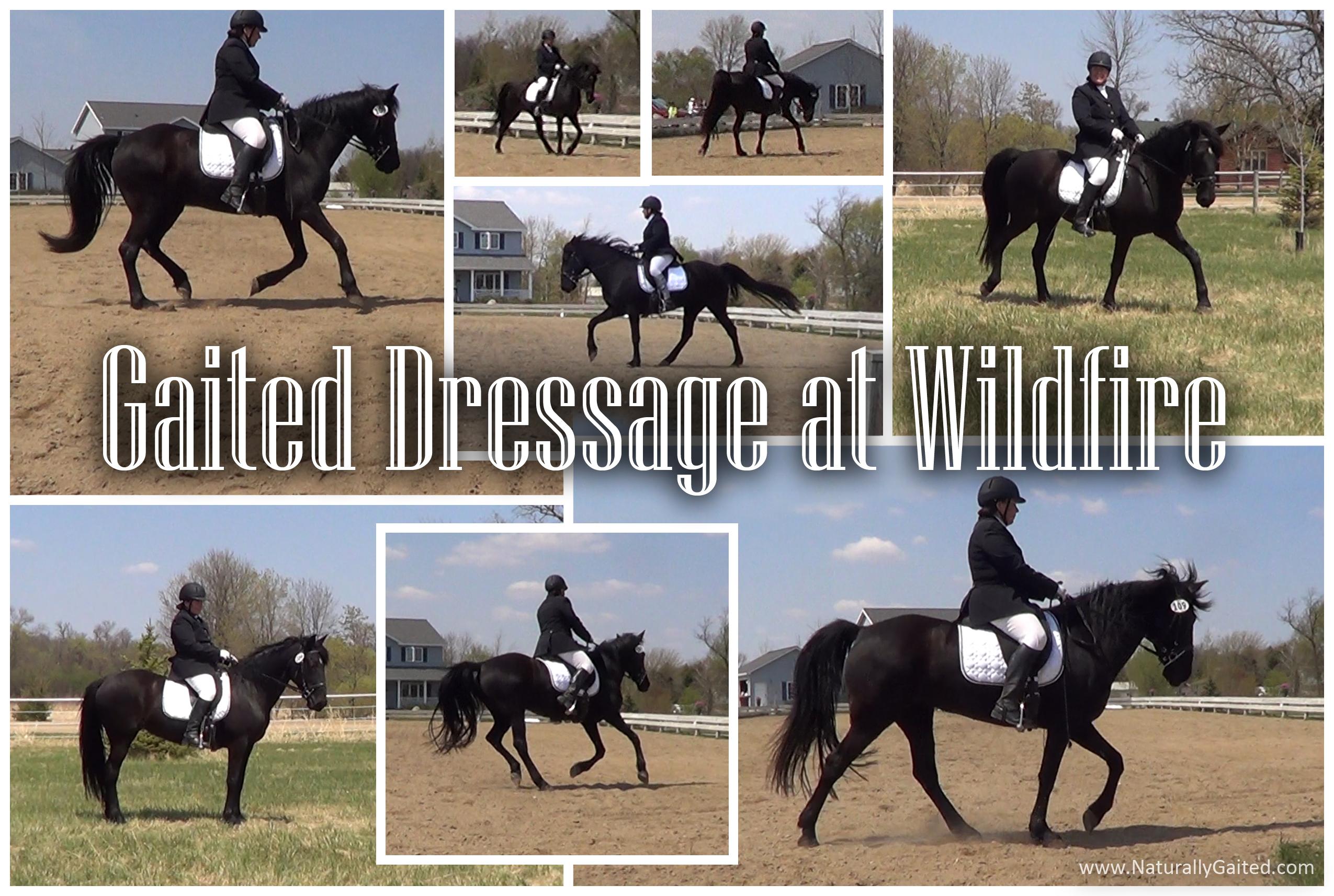 Gaited Dressage at Wildfire