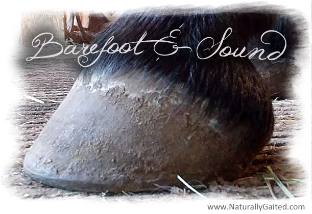 natural hoof trimming