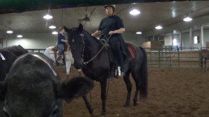 Working cows with a gaited horse