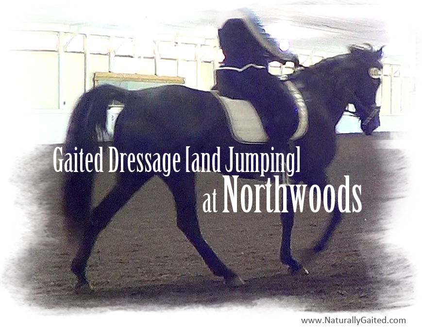 Gaited dressage and jumping at Northwoods