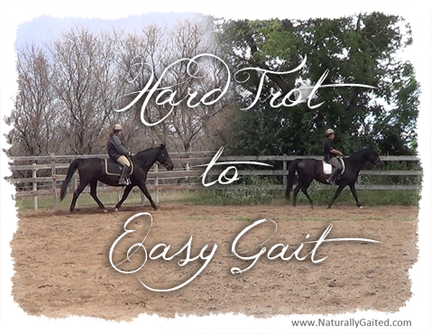 Hard trot to easy gait