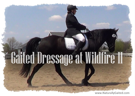 Wildfire Schooling Dressage Show open to gaited dressage